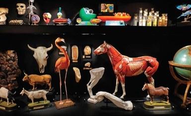 Exploration nature aux musées